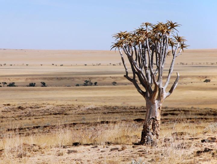 desert-509240_960_720.jpg