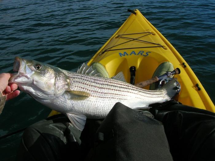fishing-558232_960_720