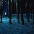 person holding a flashlight in a dark forest of tall trees with snow on the ground