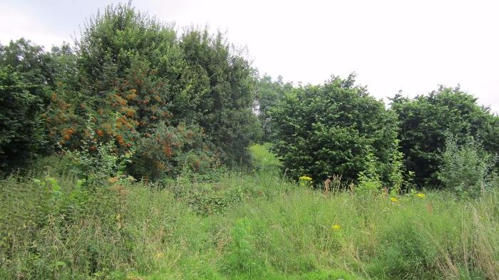 1280px-green_space_near_pool_lane_ince_cheshire_5-e1505611663808.jpg