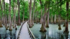 4 wonderful swamp hikes in Mississippi