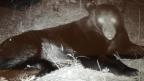 Black bears in southwest Mississippi