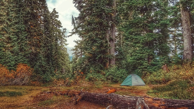 green dome tent set among tall conifers