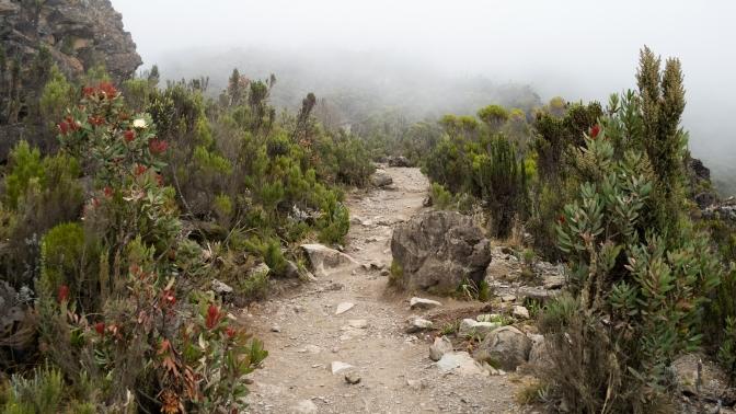 kilimanjaro_vegetation.jpg