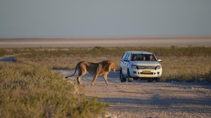 lion-2011579_960_720 (1)