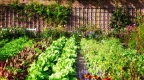 How to plant a survival garden