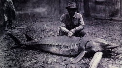 sturgeon_and_man_1944_jackson_mississippi_pre_barnett_dam_mississippi_museum_of_natural_science_archives