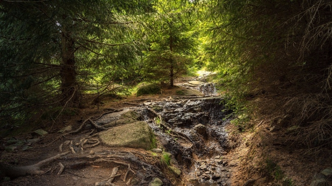 forest-2776178_960_720