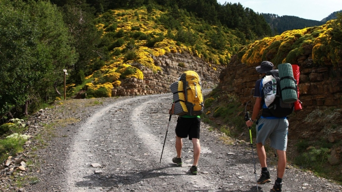 hike_backpack_backpackers_walking_mountains_mother_inlaws_pillow_plant_in_bloom_yellow_yellow_flowers-865320