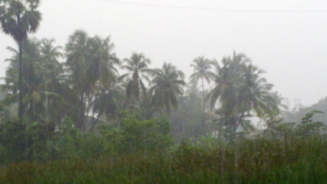 Coconut_Trees_(Heavy_rain)_,Virar's_fly-over_,_Viva_college_Road,virar_(W)_-_panoramio