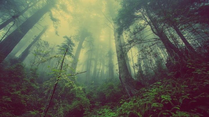 forest-931706_960_720.jpg
