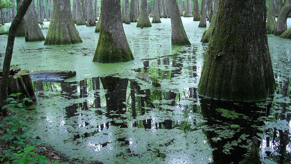 1024px-Pearl_River_backwater_in_Mississippi.jpg